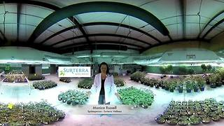 Cannabis 360 - Video