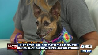 """The Animal Foundation prepares for annual """"Clear the Shelter"""""""