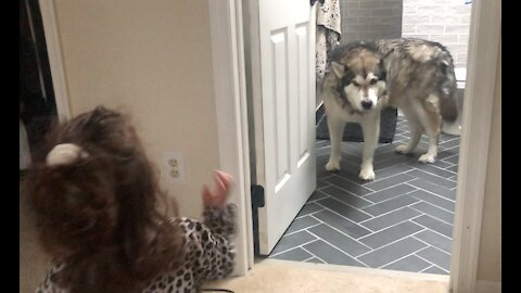 Cute little girl waves hello to her dog and says I love you