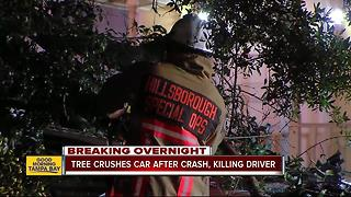 Driver dead after crashing into tree overnight in Tampa - Video