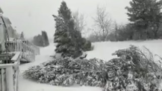 Nor'easter Knocks Down Trees in Pennsylvania - Video