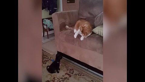 Cat's Reaction to New Puppy is Too Funny!