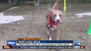 Good morning from Roxy and the Maryland SPCA! - Video