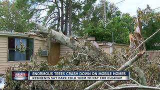 Enormous trees crash down on mobile homes - Video