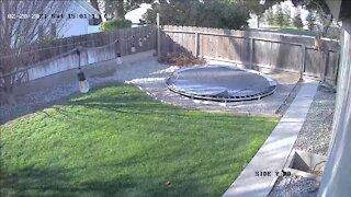 Security camera shows dog's incredible climb to escape yard