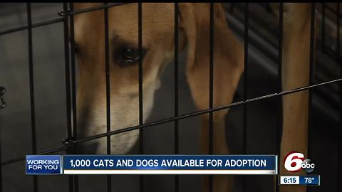 Big adoption event this weekend at the Indiana State Fairgrounds