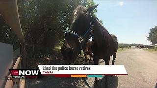Chad the police horse retires after 13 years of service in Tampa - Video