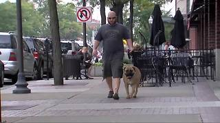 Ask Dr. Nandi: The health benefits of walking your dog - Video