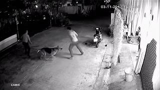 Loyal pet dog helps owner being attacked in the street - Video