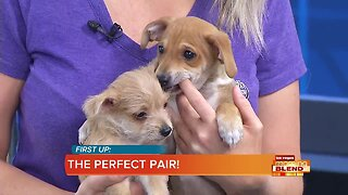 PICK OF THE LITTER: 2 Adorable Puppies!
