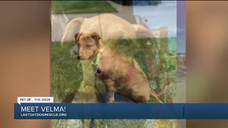 Meet Velma: Our Pet of the Week