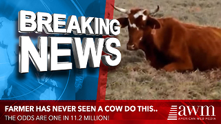 What This Cow Just Gave Birth To Has A 1 in 11.2 Million Odds Of Happening