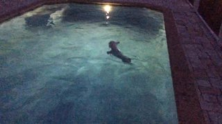 Dog squeals in excitement for nighttime swim - Video