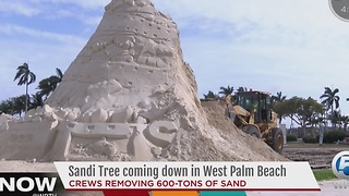 Sandi Tree coming down in West Palm Beach - Video