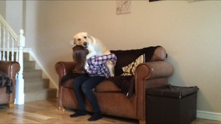 Incredibly lazy dog receives piggyback ride up stairs - Video