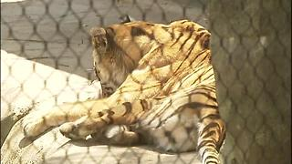 ANIMALS On This Day in 2012: Indianapolis sees highest June temperatures ever - Video