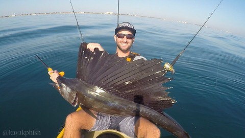 Guy Catches Giant Sailfish In Palm Beach While Riding Kayak