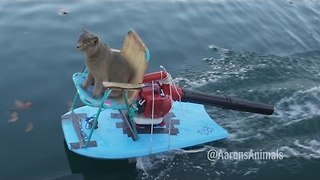 Guy Builds Jet Ski For His Cat And It's Glorious - Video