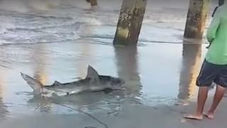 Shark Bites Man on Wrightsville Beach, North Carolina - Video