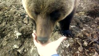 Russian workers hand-feed friendly wild bear - Video