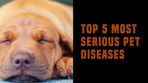 Top 5 Most Serious Pet Diseases