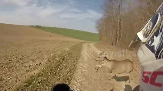 Quad biker crashes into deer - Video