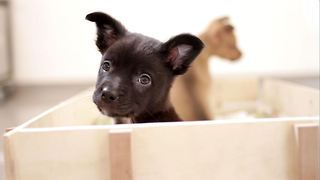 1 Minute of Rescued Puppies Having A Playdate - Video
