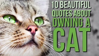 10 Memorable quotes about the joys of owning a cat - Video