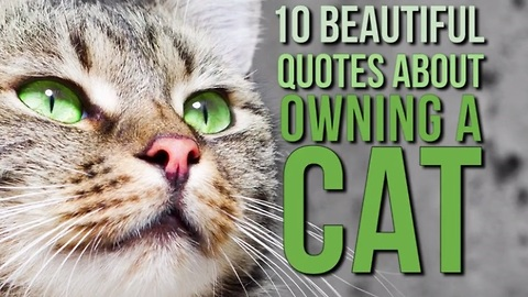 10 Memorable quotes about the joys of owning a cat