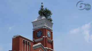 In Indiana, trees grow out of roofs. - Video