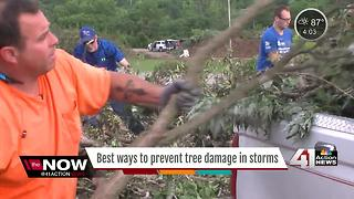 How to prevent tree damage before severe weather - Video