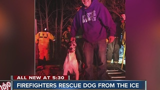 Firefighters rescue dog from ice - Video