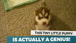 This Is The Smartest Puppy In The World - Video