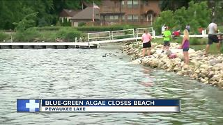 Possible blue-green algae could shut down Pewaukee beach and affect festivals - Video