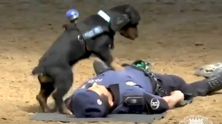 A Video Of Police Dog Performing CPR Has Gone Viral