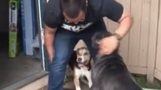 Excited dogs welcome owner home from Navy deployment
