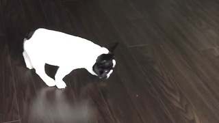 Puppy Confused - Video
