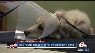 Dog found 10 days after owner shot the pet - Video