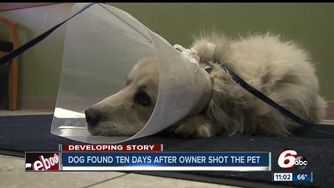 Dog found 10 days after owner shot the pet