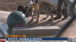 Dog helps rehabilitate seized tiger in Nye County - Video
