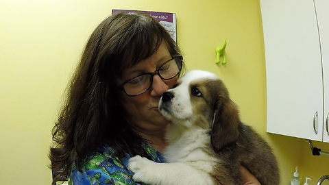 Vet falls in love with puppies, can't part with them