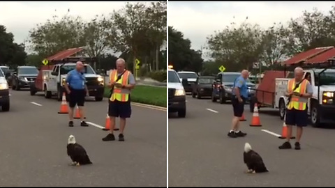 Bald Eagle Refuses To Move On Road. Officers Get Closer, Then Take Swift Action