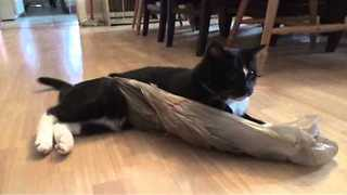 Cat Takes on Plastic Bag in Epic Battle - Video