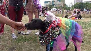 Dogs take part in Pride In London show - Video