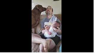 Overly Compassionate Pooch Helps Owner Feed A Newborn Baby - Video
