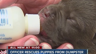 Puppies rescued from dumpster by IMPD officer doing well - Video