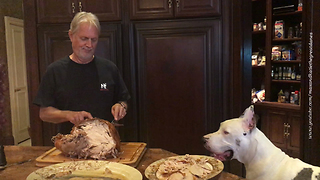 Funny Talking Turkey Carving with Great Danes and Cat - Video