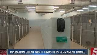 Operation Silent Night Helps Pets Find Homes - Video