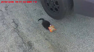 This Kitten Was Spotted With A Noodle Bag On Head