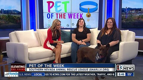 Pet of the Week 10/13